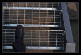 Шаги лестницы металла