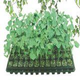 熱い販売新しいデザイン温室のための安い金属の庭プランター