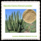 Polvo natural del extracto del cacto de la Opuntia de la alta calidad