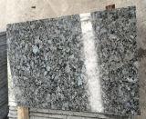 青いPearl GraniteおよびFlooringのためのGranite Tiles