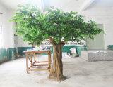 Im Freien künstlicher Bantambaum-Baum für Grundbesitz