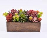 Plantas suculentas mezcladas en el rectángulo de madera Shaped para la decoración casera