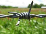 Покрынный PVC гальванизированный колючий провод утюга