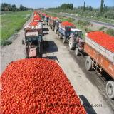 Precio de la goma de tomate el mejor con el embalaje del tambor/los compartimientos/el embalaje de madera del estaño