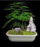 Potenciômetro de flor de bambu da fibra da decoração do jardim e da casa (BC-FP1025)