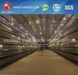 Huevo de Argelia/capa de pollo de las baterías de la granja para las ponedoras