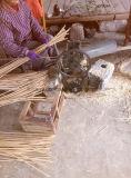 Корзина старого английского рожочка страны вися в Bamboo листьях веревочки & ладони