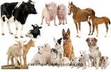Высоко - сала сливочник молокозавода Non для животного питания/питания