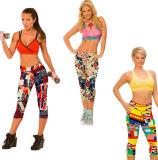 A aptidão elevada da cintura das mulheres imprimiu as caneleiras colhidas estiramento (50041)