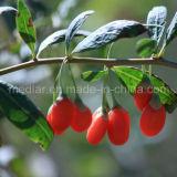 De Vervaardiging Organische Wolfberry van de mispel