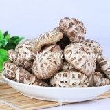 Гриб Shiitake экспорта прямой связи с розничной торговлей фабрики высушенный грибом