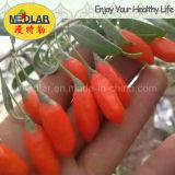 中国の日光の生物Gojiの果実(Wolfberry0