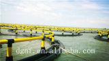 Carpa o acuacultura de la Tilapia que cultiva jaulas de los pescados