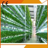 Парник поликарбоната земледелия коммерчески с Hydroponic системой