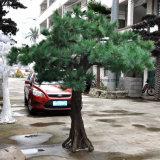 옥외 인공적인 소나무