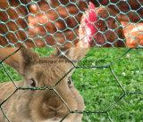 Ячеистая сеть Сетк-Цыплятины провода цыпленока