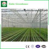 Estufa do policarbonato para plantar
