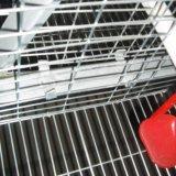 판매를 위한 강하고 튼튼한 어린 암탉 닭 감금소 시스템