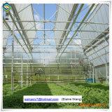 직업적인 유리제 온실 좋은 냉각 장치를 가진 상업적인 녹색 집