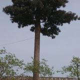 中国製電気通信の人工的なプラントおよび木タワー