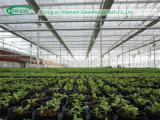 Estufa de vidro comercial para o Seeding