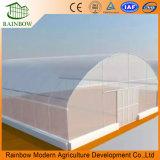 Serre chaude simple commerciale/hydroponique de film plastique d'envergure pour la plantation végétale