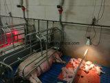 Bulbo infravermelho PAR38 100W 150W 175W do IR da lâmpada de aquecimento