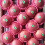 Fornitore con esperienza di Qinguan rosso fresco Apple