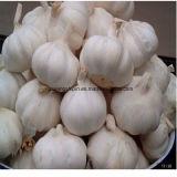 Aglio naturale cinese 200g, 250g di stile fresco per sacchetto netto