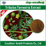 Порошок выдержки Terrestris Tribulus завода 100% естественный