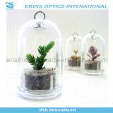 Mini planta viva, árbol del animal doméstico de la planta (A, B, C, D, E, F)