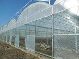 Coût bas 10 ans de garantie de double de mur de polycarbonate de cavité de serre chaude en plastique de feuille