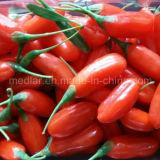 Bacche organiche natali del Ningxia Goji