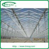Estufa de vidro da Multi-Extensão do telhado do retângulo para crescer