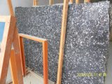 Seashell Flower Slab per Countertops e Building Materials