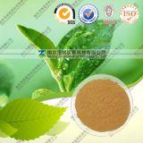 Groen Uittreksel 40% van de Thee Polyphenol van de Thee van ~98%