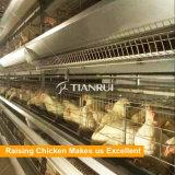 Fornecedores automáticos do equipamento das aves domésticas da galinha em África do Sul