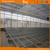 Polycarbonate Sheet Greenhouse pour Seeding