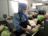 Mola 17g/Piece Rolls congelada vegetal de Tsing Tao de sal