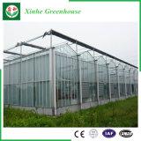 De Serres van het Glas van de Tunnel van de tuin/van de Landbouw voor het Groeien van de Groente/van de Bloem
