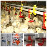 Il pollame gestisce la strumentazione della tettoia per produzione della griglia