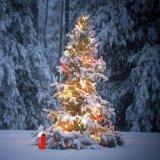 Het Licht van het LEIDENE Koord van Kerstmis voor de Verjaardag van het Huwelijk van de Partij