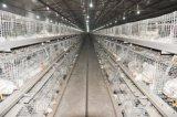Gabbia del pollo della carne con il sistema automatico della strumentazione per l'azienda avicola (un tipo)