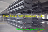 Cage de poulet de matériel de volaille de qualité