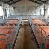 Aziende agricole Breeding del maiale per la strumentazione di allevamento dei porcini e per uso di Anmial Feedr