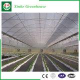 다중 경간 PE/Po 필름 수중 식물 녹색 집