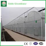 Serra della pellicola del PE del blocco per grafici d'acciaio della Multi-Portata per le verdure
