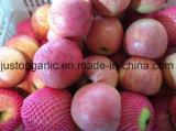 Rojo fresco chino FUJI/Huaniu/Gala/Golden/Qinguan/Jiguan Apple