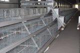 Matériel de cage de Chiken de poussin de poulette de couche de grilleur à vendre