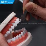 أسنانيّة [أرثدودنتيكس] كتيفة يعيّن مقياس ضعف ينهى يعيّن مقياس